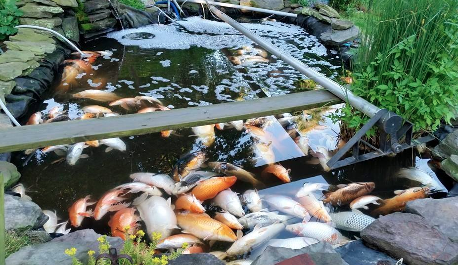 The science of water hanover koi farms for Koi pond maker
