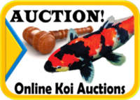 Koi auctions Hanover Koi Farms