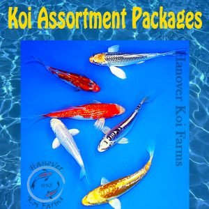 Koi for sale Assortment Packages