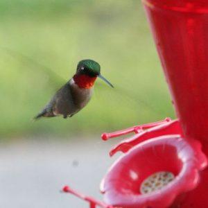 Hummingbird Supplies